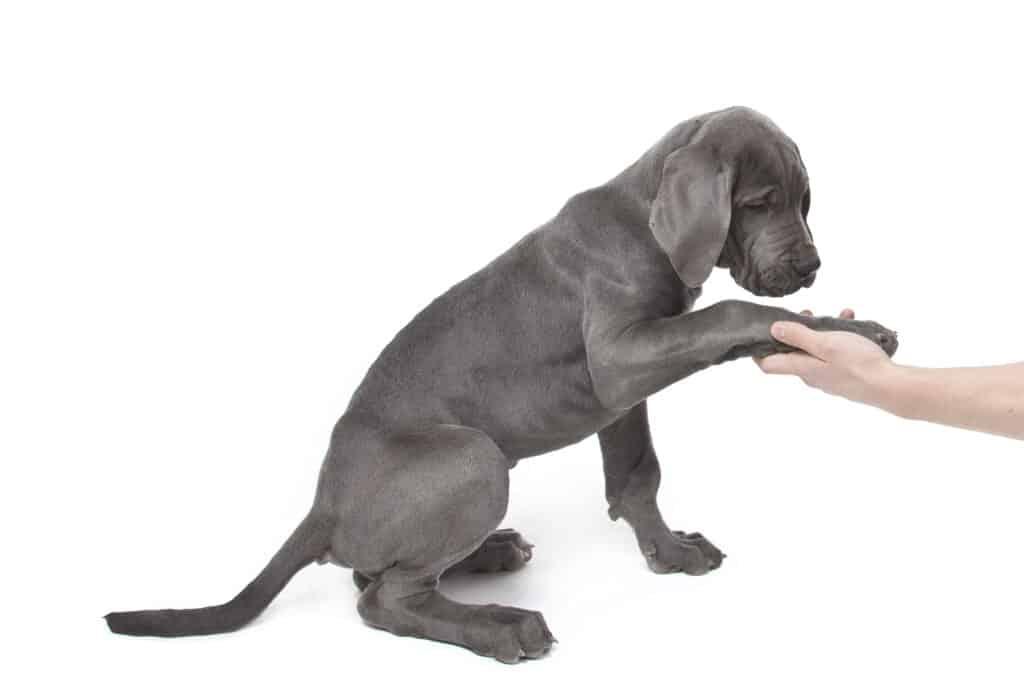 שפת הכלבים